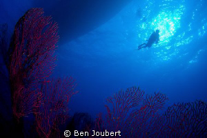 Diver silhouette by Ben Joubert 